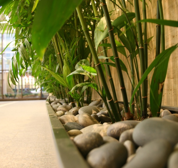 Business feng shui jenny blume - Plants for good feng shui ...