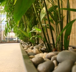 reception - plants in feng shui
