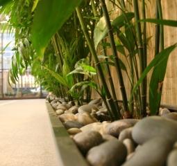 reception - plants in feng shui