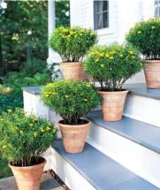 feng shui yellow flowers for selling homes