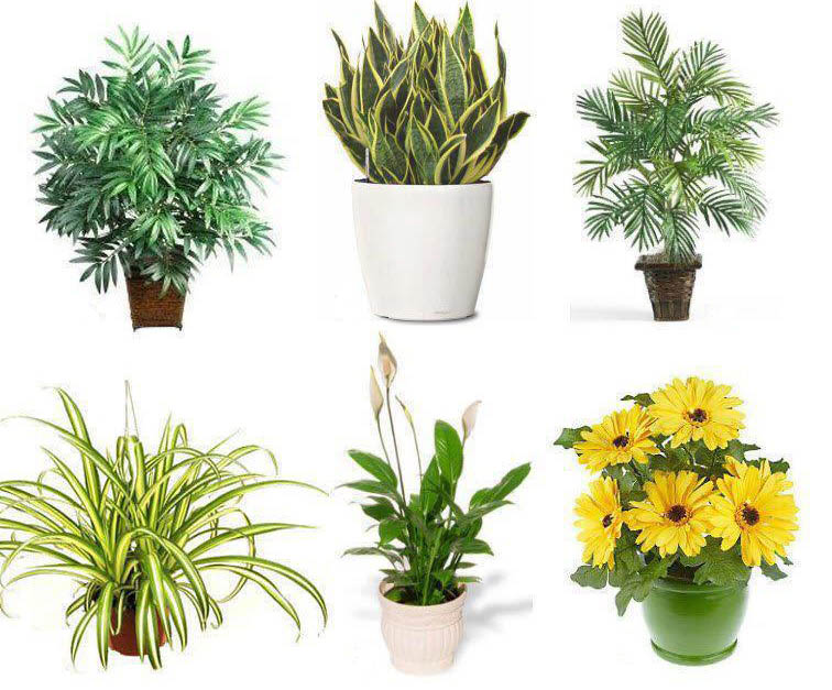 Best house plants jenny blume for Best air purifying plants for bedroom