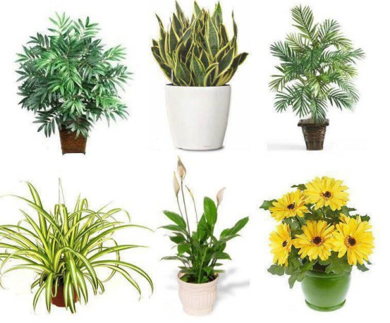 air purifying house-plants