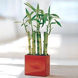 best feng shui plants | jenny blume